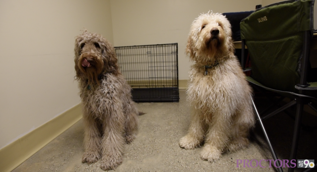 Sammy and Bailey, the dogs from Finding Neverland.